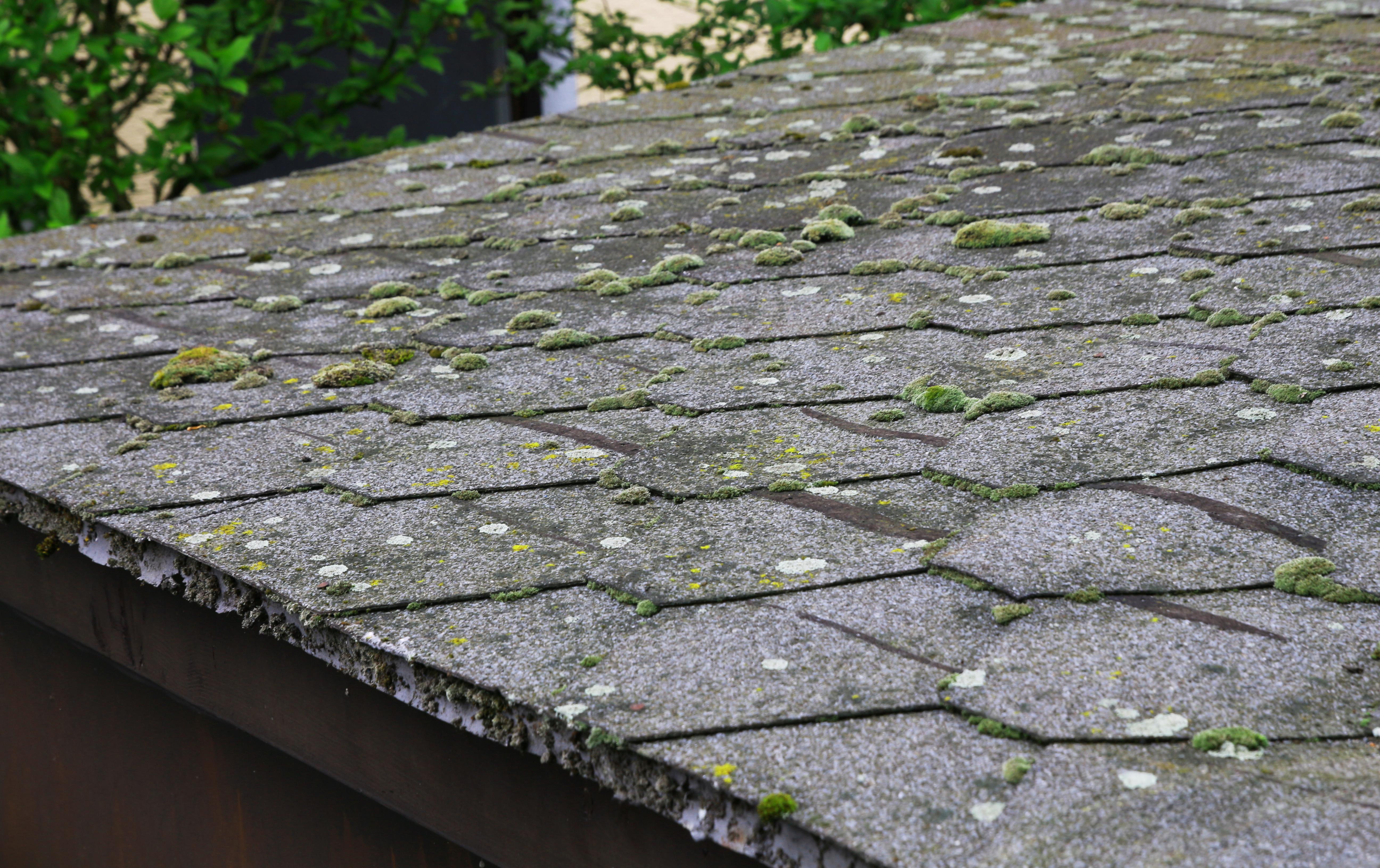 Mah na strehi